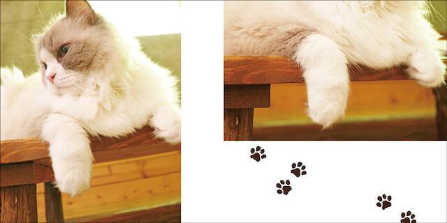 吉祥寺の猫カフェ「てまりのおうち」にいる猫の手