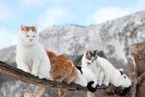 大自然の中でのんびりと暮らすかご猫ファミリーの猫たち