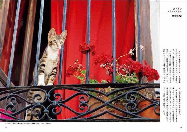 岩合光昭さんの新作フォトエッセイ「世界のねこみち」に登場するスペインのネコ