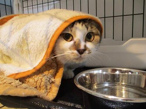 ペットライフの保護猫