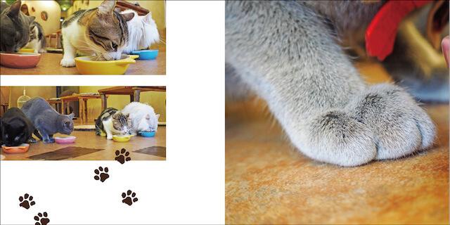 写真集「にゃ~ん手ね」、お食事中の猫たちの手