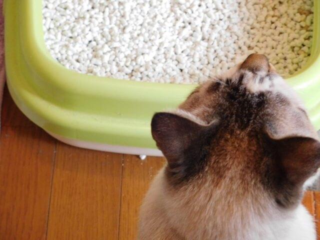 一般的な猫トイレのイメージ