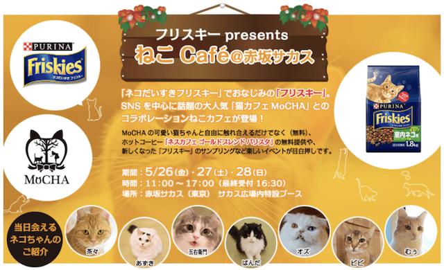 赤坂サカスにオシャレな猫カフェMoCHA(モカ)が期間限定で登場