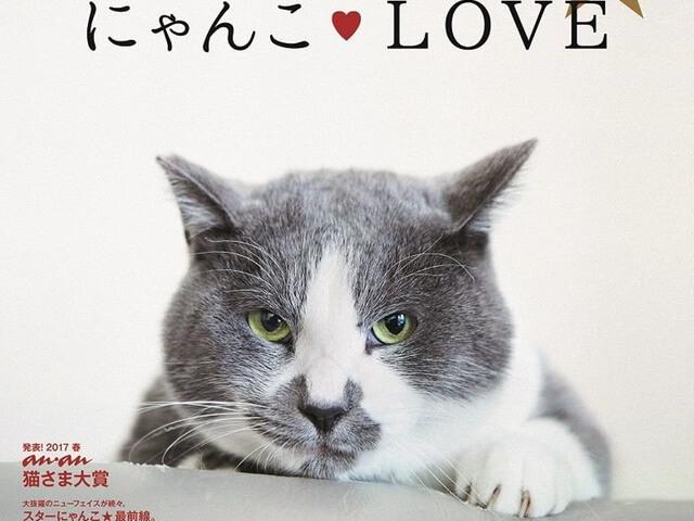 雑誌「anan」の最新号(No.2052)は「春のにゃんこ LOVE」