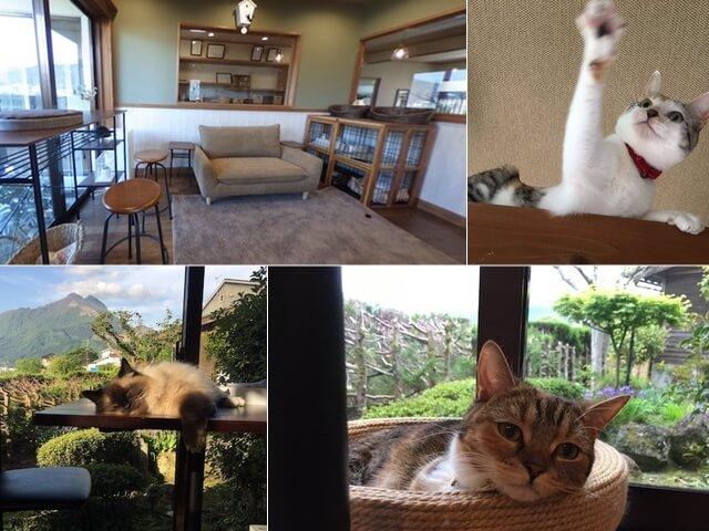 湯布院に猫カフェを併設した温泉宿「笑ねこの宿」がオープン