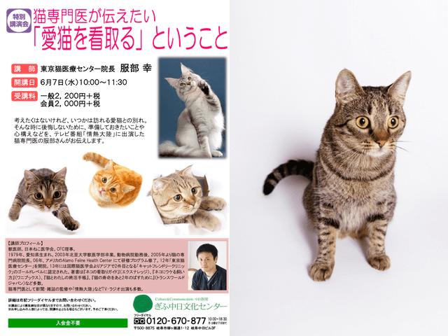 ネコ専門の獣医師・服部幸先生のセミナーが6/7に岐阜で開催