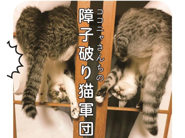猫6匹の大家族フォトエッセイ「ココニャさんちの障子破り猫軍団」
