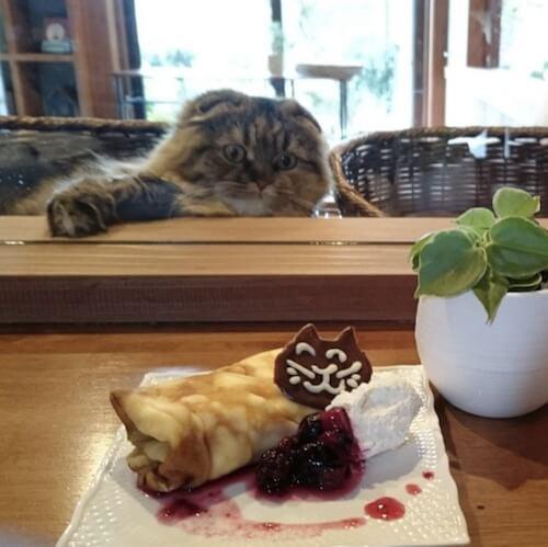 湯布院の猫カフェ「笑ねこカフェ」の猫スイーツ