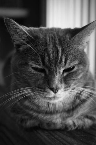 猫のイメージ写真(モノクロ)