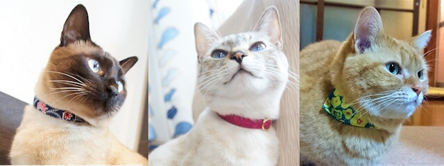 首輪でオシャレを楽しむ猫たち