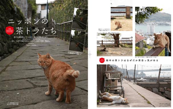 書籍「茶とらねこのほん」、日本の茶トラ編