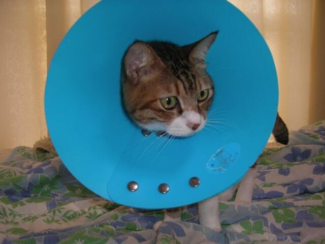 ケガをしている猫のイメージ写真