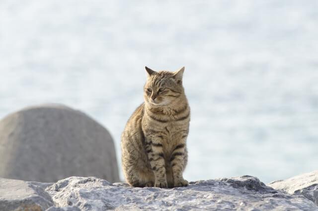 クリエイターが撮影したネコ写真