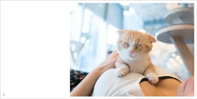 写真集「パイニャン」、おっぱいの上で眠る猫