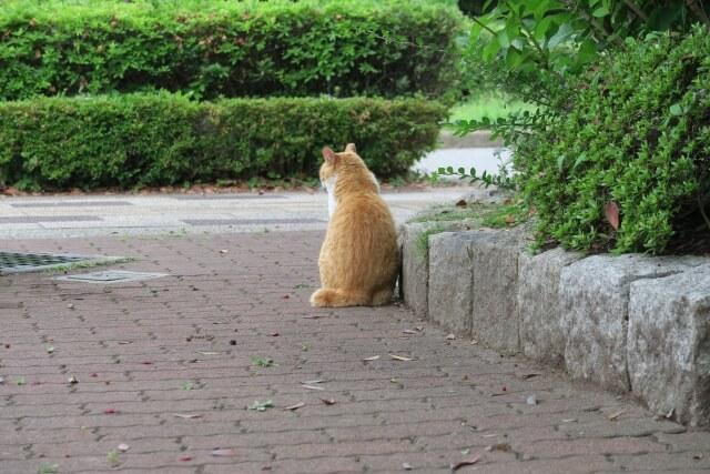 外で佇む野良猫(チャトラ)の後ろ姿