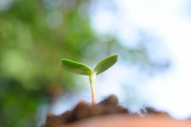 オーガニックの植物イメージ