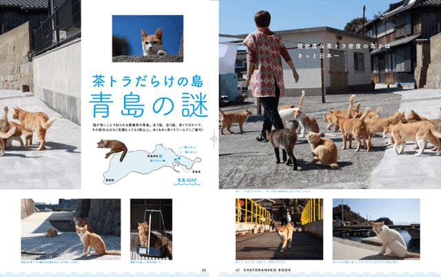日本の猫島の茶トラ特集