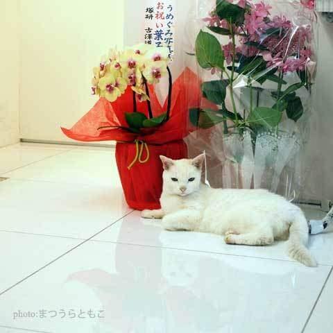 うめぐみ写真展11の会場、10W gallery(テンワットギャラリー)の看板猫クーちゃん