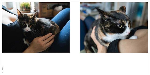 写真集「パイニャン」、女性の胸に収まる猫