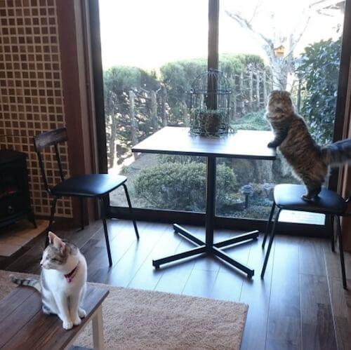 湯布院の猫カフェ「笑ねこカフェ」にいる猫たち