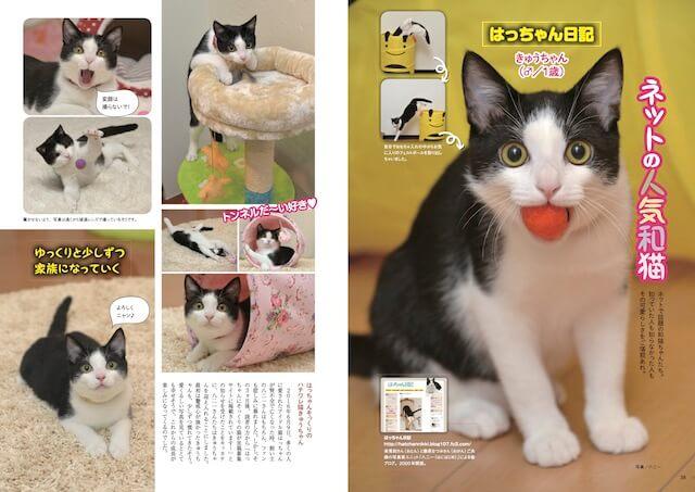八二一さんのブログ・はっちゃん日記からは猫の「きゅうちゃん」が登場