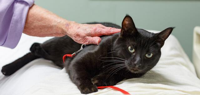 猫ヘルパー シーズン8に登場する黒猫