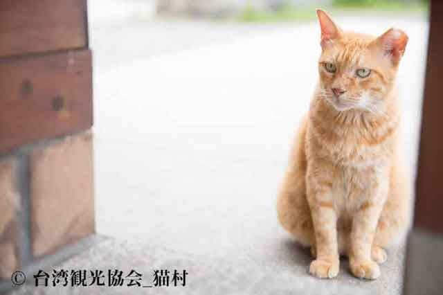 台湾・ホウトン(侯硐)の茶トラ猫