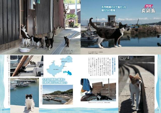 真鍋島(岡山県笠岡市)の猫