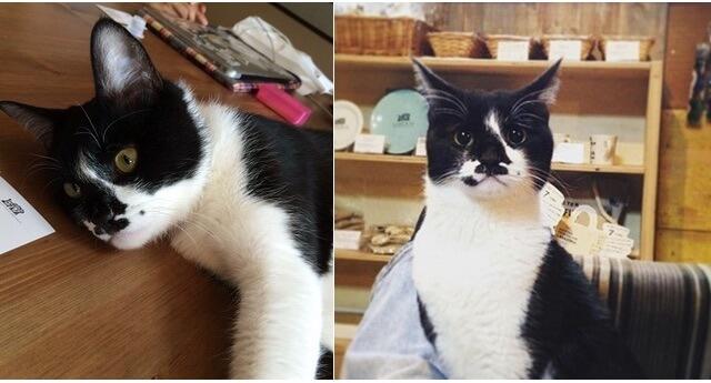 世田谷のネットワークで保護猫支援