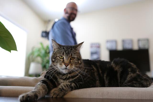 「猫ヘルパー シーズン8~猫のしつけ教えます~」第四話、困った店ねこ