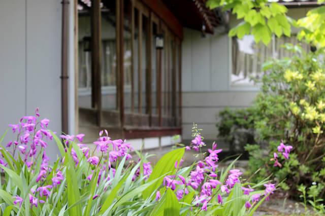 月猫カフェの広い庭