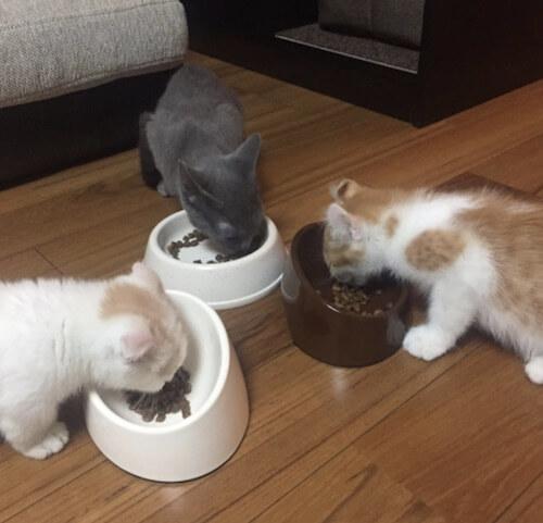 猫カフェ「みーちゃ・みーちょ」のご飯タイム