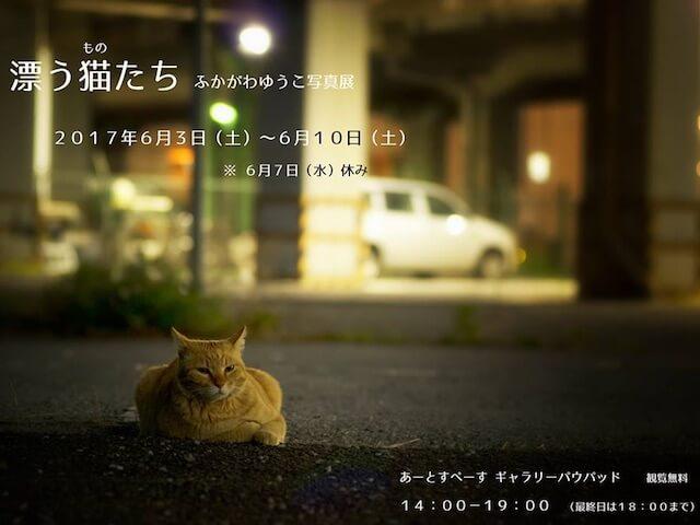 ふかがわゆうこ写真展「漂う猫(もの)たち」