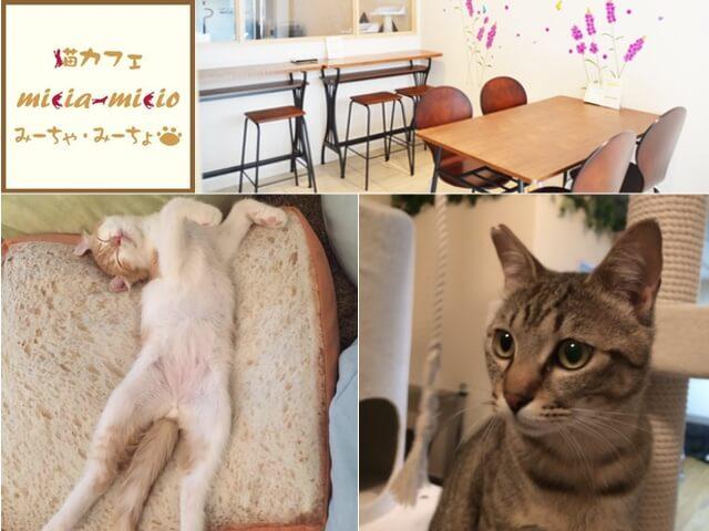 大阪・阿倍野区に猫カフェ「みーちゃ・みーちょ」がオープン