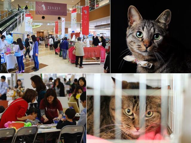 東京江戸川区の島忠ホームズで6/17〜猫助けイベントが開催