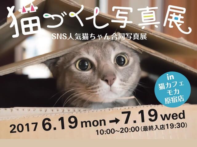 猫カフェMoCHA(モカ)の原宿店、SNSで人気のネコ写真展を開催