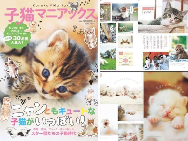 世界の猫30品種を収録した「子猫マニアックス」猫図鑑としても楽しめるニャ