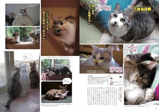 「こはる日和」からは、こはる、こうめ、ちまきの3匹の猫が登場