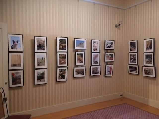 写真家・内田園子さんのネコ写真展、展示作品