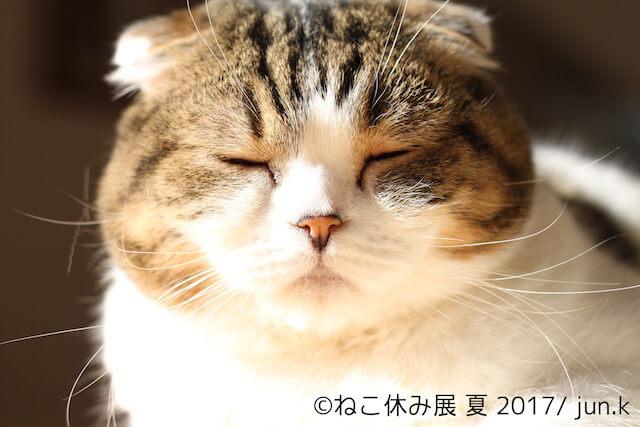 人気ネコ、どんぐりの眠そうな写真 by jun.k