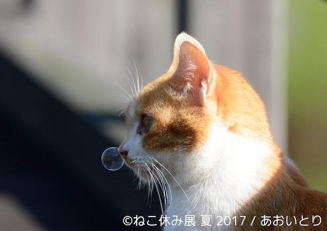 あおいとりの鼻提灯猫
