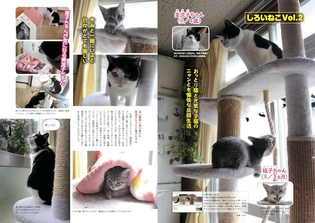 ブログ「しろいねこ Vol.2」からは美流子ちゃん、福子ちゃん2匹の猫が登場