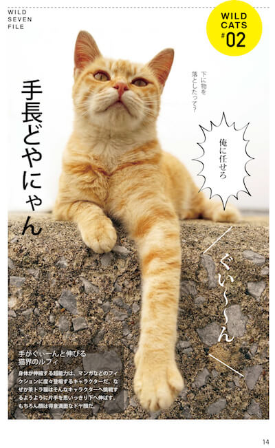 手の長いドヤ顔の猫「どやにゃん」