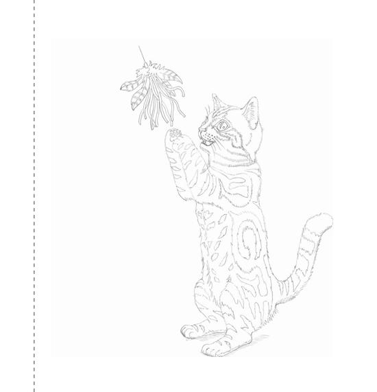 猫の塗り絵(アメリカンショートヘア)、輪郭
