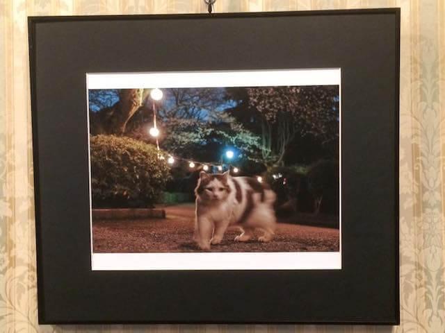 写真家・内田園子さんのネコ写真