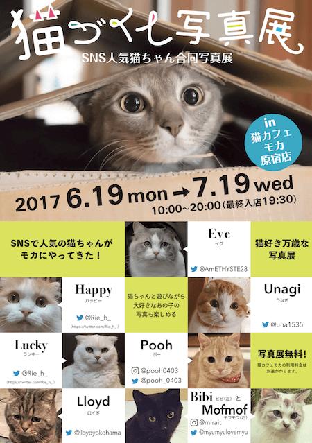 猫カフェMoCHA(モカ)の原宿店で開催中の「猫づくし写真展」