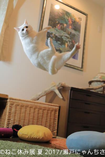 無重力猫ミルコ/瀬戸内にゃんちさ