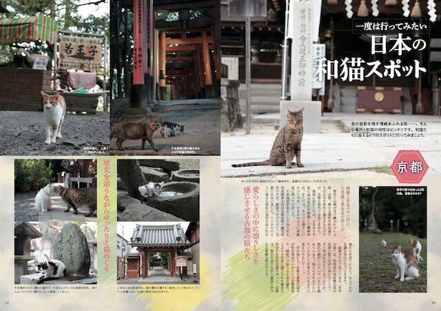 京都の和猫
