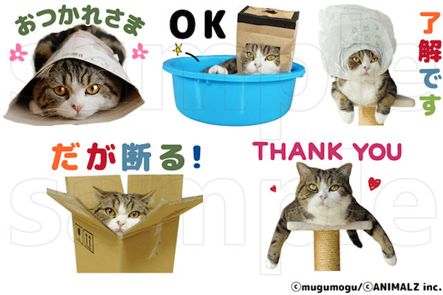 人気猫「まる」の公式LINEスタンプ