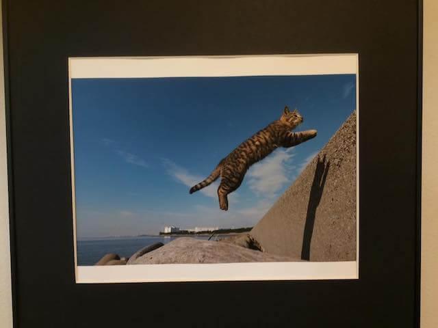 写真家・内田園子さんのネコ写真、ジャンプする猫